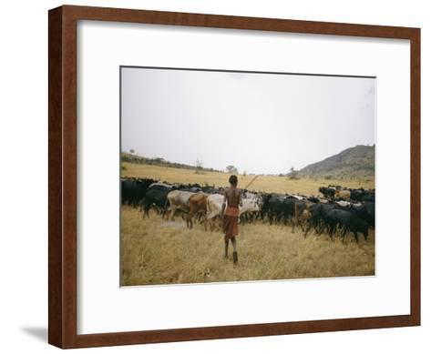 A Boy Tends to His Herd of Cattle-Joe Scherschel-Framed Art Print