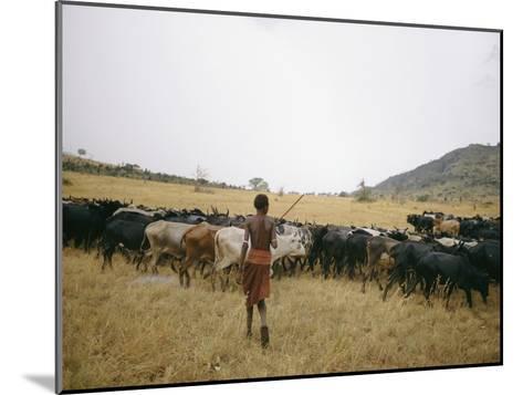 A Boy Tends to His Herd of Cattle-Joe Scherschel-Mounted Photographic Print