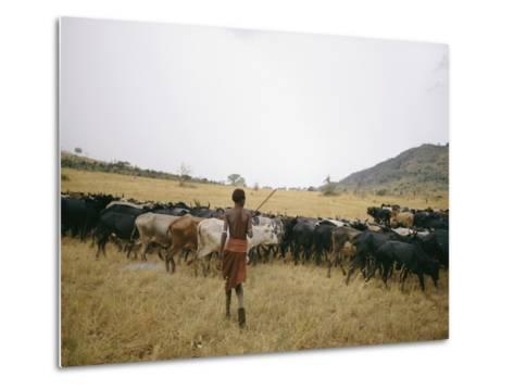 A Boy Tends to His Herd of Cattle-Joe Scherschel-Metal Print