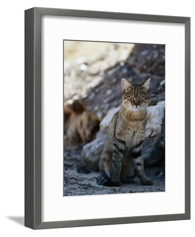 African Wildcat-Nicole Duplaix-Framed Art Print