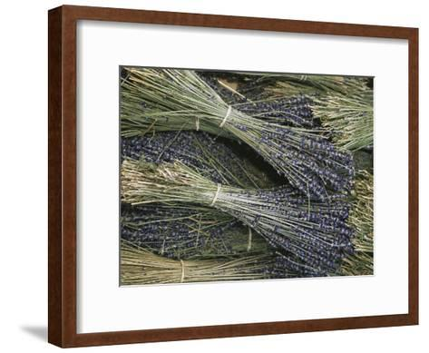 Sprigs of Lavender, Provence Region, France-Nicole Duplaix-Framed Art Print