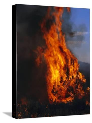 Flames from a Prescribed Fire Burn Trees and Sagebrush-Melissa Farlow-Stretched Canvas Print