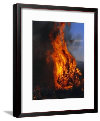 Flames from a Prescribed Fire Burn Trees and Sagebrush-Melissa Farlow-Framed Art Print
