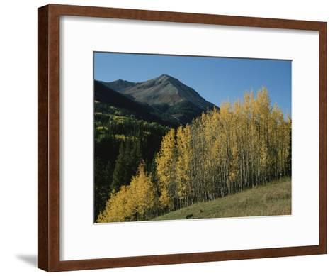 A View of Quaking Aspen Trees with Red Mountain in the Background-Marc Moritsch-Framed Art Print