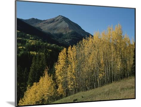 A View of Quaking Aspen Trees with Red Mountain in the Background-Marc Moritsch-Mounted Photographic Print