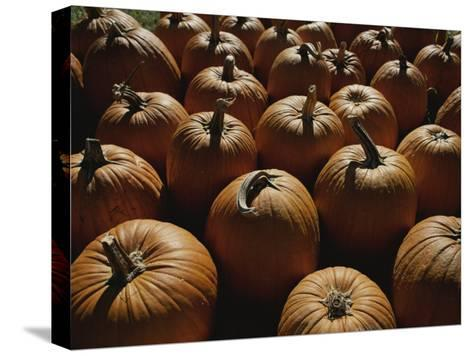 The Slant of Twilight Falls Across a Cluster of Pumpkins-Stephen St^ John-Stretched Canvas Print