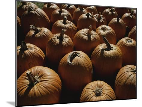 The Slant of Twilight Falls Across a Cluster of Pumpkins-Stephen St^ John-Mounted Photographic Print