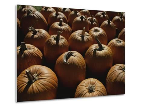 The Slant of Twilight Falls Across a Cluster of Pumpkins-Stephen St^ John-Metal Print