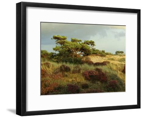 Heathland on the Island of Hiddensee in the East Sea-Norbert Rosing-Framed Art Print