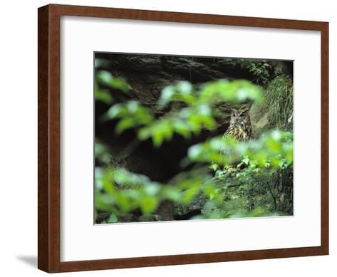 Owl in Woodland, Sachsische Schweiz National Park, Germany-Norbert Rosing-Framed Art Print