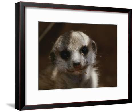 A Close View of a Meerkat (Suricata Suricatta) Pup-Mattias Klum-Framed Art Print