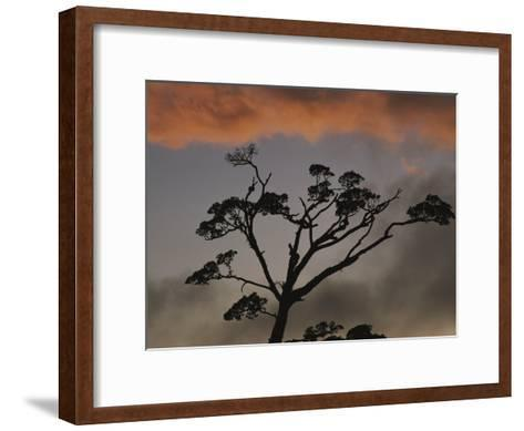Rain Forest Tree Silhouetted against the Sky, Costa Rica-Michael Melford-Framed Art Print