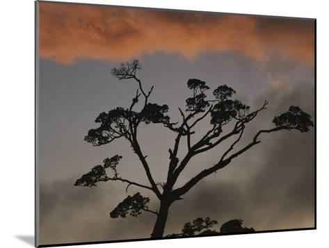 Rain Forest Tree Silhouetted against the Sky, Costa Rica-Michael Melford-Mounted Photographic Print