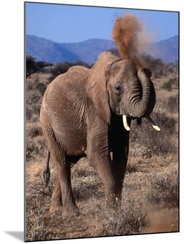 Elephant (Loxodonta Africana) Dust Bathing, Samburu National Reserve, Rift Valley, Kenya-Mitch Reardon-Mounted Photographic Print