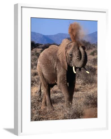 Elephant (Loxodonta Africana) Dust Bathing, Samburu National Reserve, Rift Valley, Kenya-Mitch Reardon-Framed Art Print