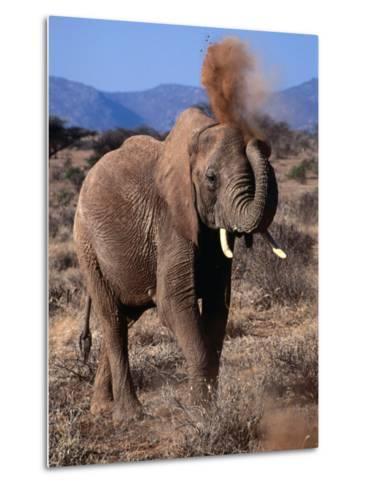 Elephant (Loxodonta Africana) Dust Bathing, Samburu National Reserve, Rift Valley, Kenya-Mitch Reardon-Metal Print