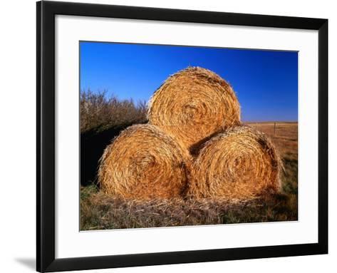 Three Hay Bales on Farm in Red River Valley, Alberta, Canada-Barnett Ross-Framed Art Print