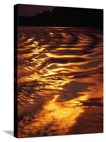Sunlight Reflecting off the Dark Water of the Rio Negro, Amazonas, Brazil-Tom Cockrem-Stretched Canvas Print