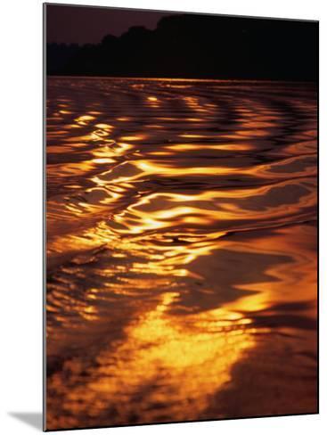 Sunlight Reflecting off the Dark Water of the Rio Negro, Amazonas, Brazil-Tom Cockrem-Mounted Photographic Print