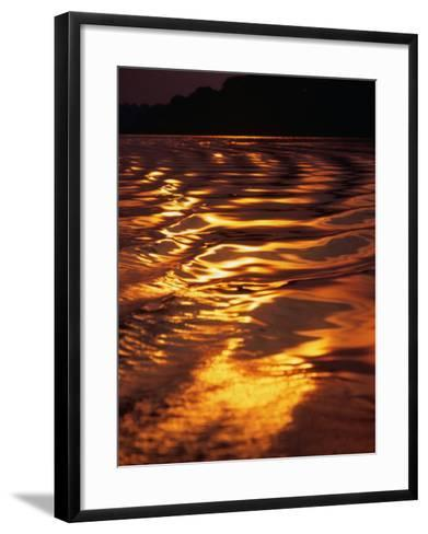 Sunlight Reflecting off the Dark Water of the Rio Negro, Amazonas, Brazil-Tom Cockrem-Framed Art Print