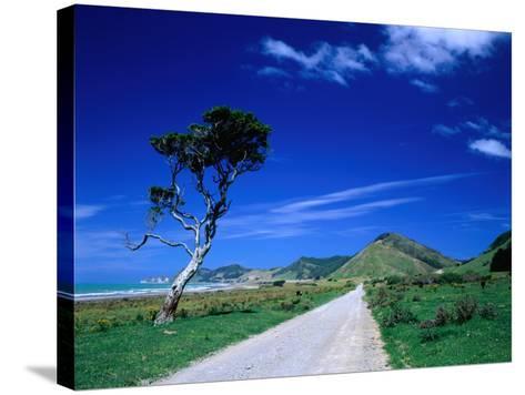 Gravel Road Linking Te Araroa to East Cape, Gisborne, New Zealand-Barnett Ross-Stretched Canvas Print