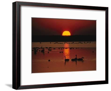 Sunset over Chincoteague Island Marsh and Geese, Virginia--Framed Art Print
