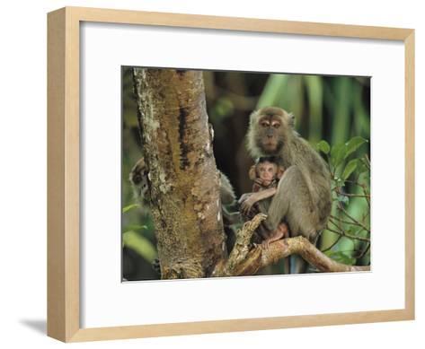 Mother and Baby Monkey Sit on a Tree Limb-Tim Laman-Framed Art Print