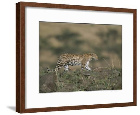 A Leopard Walks Along a Rocky Ledge in Masai Mara National Reserve-Roy Toft-Framed Art Print