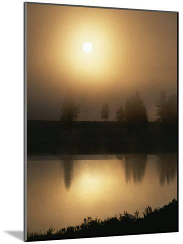 Silhouetted Trees Along the Yellowstone River at Sunrise-Tom Murphy-Mounted Photographic Print