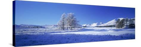 Winter Tree, Rannoch, Scotland, UK-Peter Adams-Stretched Canvas Print