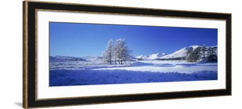 Winter Tree, Rannoch, Scotland, UK-Peter Adams-Framed Art Print