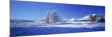 Winter Tree, Rannoch, Scotland, UK-Peter Adams-Mounted Photographic Print