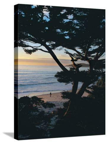 Sunset on Beach with Trees, CA-Claire Rydell-Stretched Canvas Print