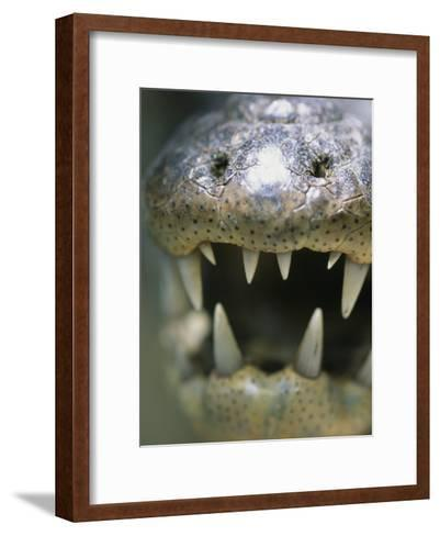 Close View of the Open Mouth of a Morelets Crocodile-Stephen Alvarez-Framed Art Print