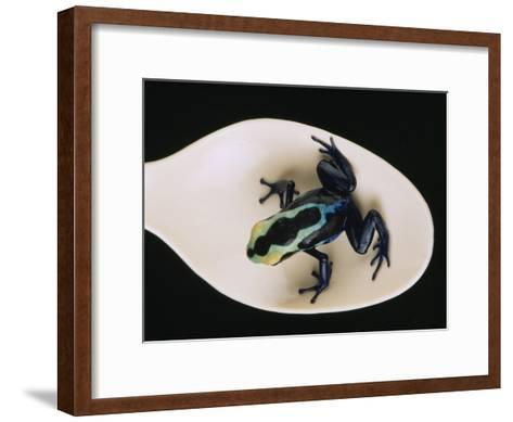 Poison Dart Frog Sits on a Plastic Spoon-O^ Louis Mazzatenta-Framed Art Print