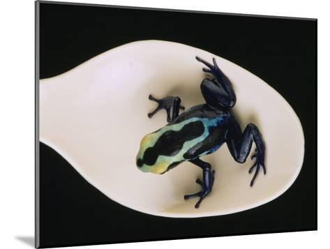 Poison Dart Frog Sits on a Plastic Spoon-O^ Louis Mazzatenta-Mounted Photographic Print