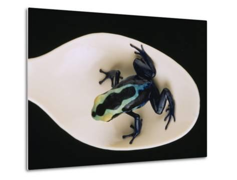 Poison Dart Frog Sits on a Plastic Spoon-O^ Louis Mazzatenta-Metal Print