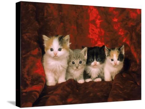 Kittens-Craig Witkowski-Stretched Canvas Print