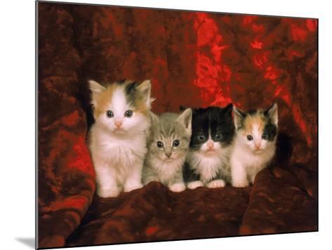 Kittens-Craig Witkowski-Mounted Photographic Print