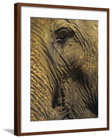 Close-up of Elephant, Thailand-Yvette Cardozo-Framed Art Print