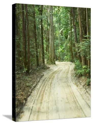Sandy Road, Fraser Island, Queensland, Australia-David Wall-Stretched Canvas Print