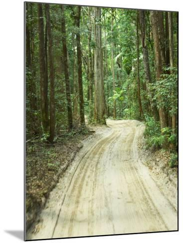 Sandy Road, Fraser Island, Queensland, Australia-David Wall-Mounted Photographic Print