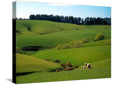 Farmland Near Clinton, New Zealand-David Wall-Stretched Canvas Print