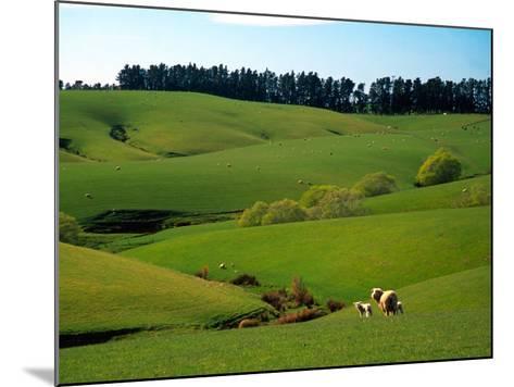 Farmland Near Clinton, New Zealand-David Wall-Mounted Photographic Print