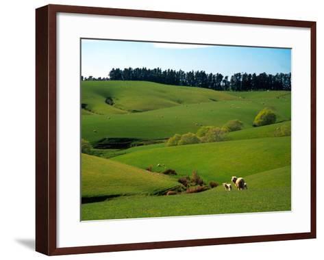 Farmland Near Clinton, New Zealand-David Wall-Framed Art Print