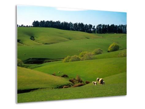 Farmland Near Clinton, New Zealand-David Wall-Metal Print