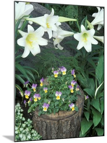 Horned Violet and Easter Lily-Adam Jones-Mounted Photographic Print