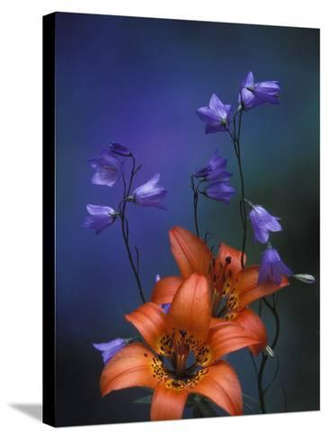 Wood Lily and Harebells, St. Ignace, Michigan, USA-Claudia Adams-Stretched Canvas Print