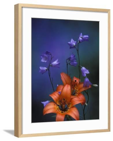 Wood Lily and Harebells, St. Ignace, Michigan, USA-Claudia Adams-Framed Art Print