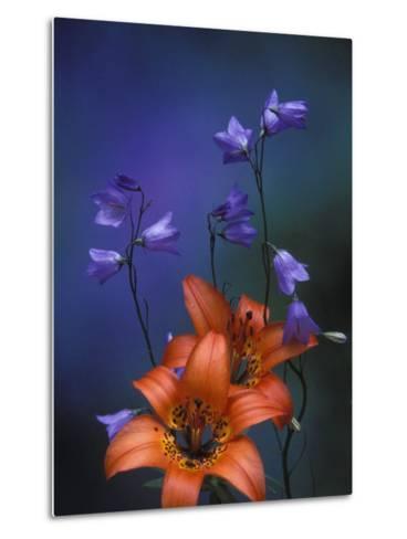 Wood Lily and Harebells, St. Ignace, Michigan, USA-Claudia Adams-Metal Print